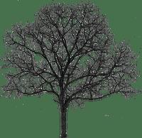 tree winter hiver deco
