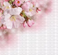 Kaz_Creations Backgrounds  Flowers
