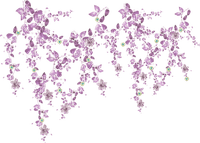purple flower border deco fleurs  violet coin