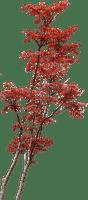 Plants.plante.Red.Victoriabea