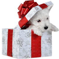 christmas noel dog chien gift present