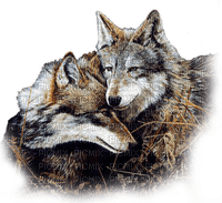 wolf AUTumn loup