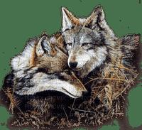wolf AUTumn loup automne