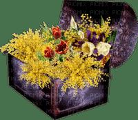 mimosas fleur mimosa flowers