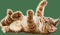 Salomelinda chat !