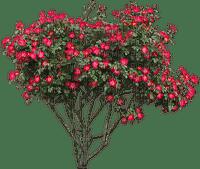 spring printemps frühling primavera весна wiosna  arbre baum tree  garden jardin tube deco bush blossom red fleur