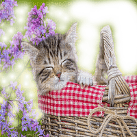 cat in basket with flowers