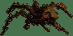 spider anastasia