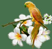 oiseau Ara-parrot bird