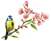 Bird,spring,pâque,fleur,branche,deko,tube, feuilles, GIF, animation,Pelageya