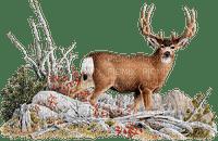 reindeer Nitsa