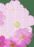pink flower fond Bb2