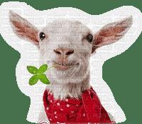 chevre goat