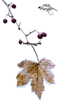 branche automne feuille_branch _ autumn leaves_+Blue DREAM 70