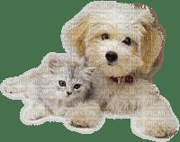Kaz_Creations Dog Pup Animals Cat Kitten
