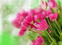 Kaz_Creations Deco  Flowers Backgrounds Background Colours