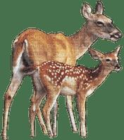 Kaz_Creations Animals Animal Deer