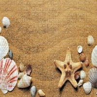 muschel shell shellfish coquille sea meer mer ocean océan ozean  fish  summer ete beach plage sand strand fond background image