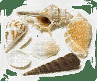 shellfish deco