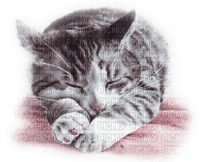 cat sleeping Chat