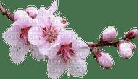 Spring Blossom Pink