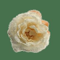 autumn deco sepia white rose kikkapink