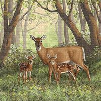 deer mother forest / cerf mère forêt