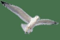 oiseau.Cheyenne63