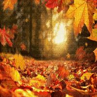 autumn bg automne  fond