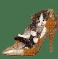 Kaz_Creations Cat Kitten In Shoe Shoes