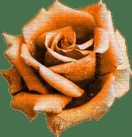 Rose.Orange