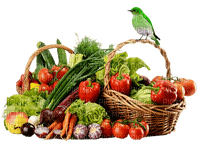 panier légumes-fruits-oiseau-bird-vegetable