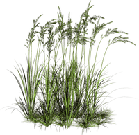 grass decoration