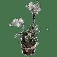 Pot.Plants.Flower.Fleur.Orchid.Plante.Victoriabea