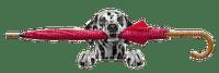 Dog.Chien.Perro.Umbrella.Victoriabea