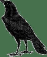 Ravens -TUBE by RAVENSONG 2018