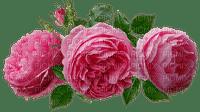 kukka fleur flower ruusu, rose